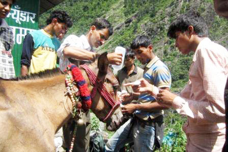 PFA Dehradun flood relief team treating one of the horses.