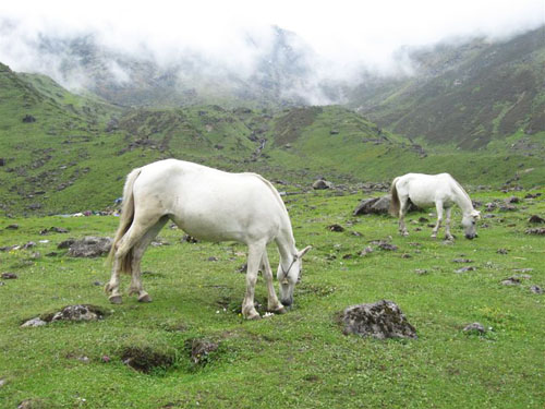Horses in the Kedarnath hills, before the floods.