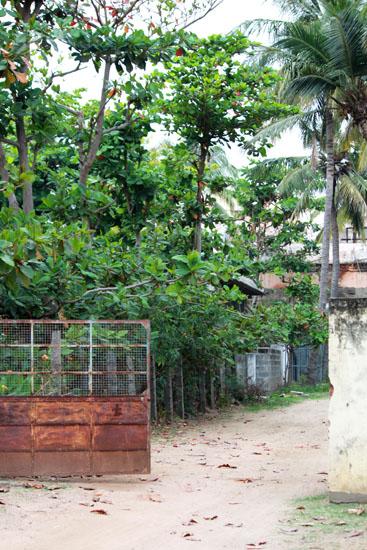 sidepathnearSri Arunachaleswarar TempleIMG_6455 2