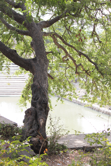 A tree and a tank, or a pool.