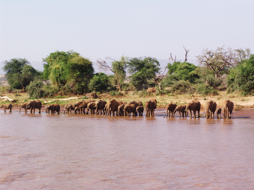 elesSamburu2010-DSC04010