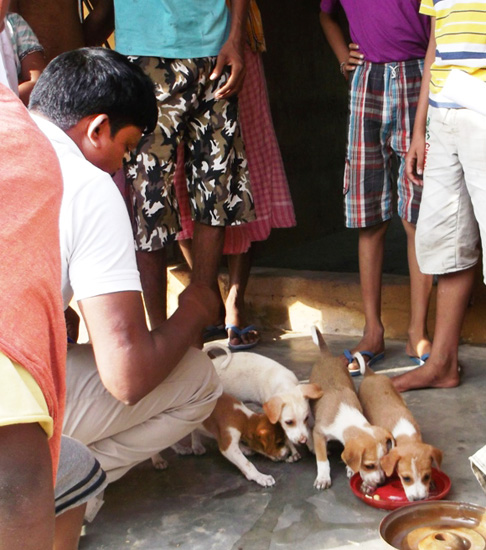 Mr. Sukumar Parida, one of our disaster response team members, feeding puppies in Bhagirathpur village in the Chhatrapur block, of Ganjam district. We have been taking special care of the babies.