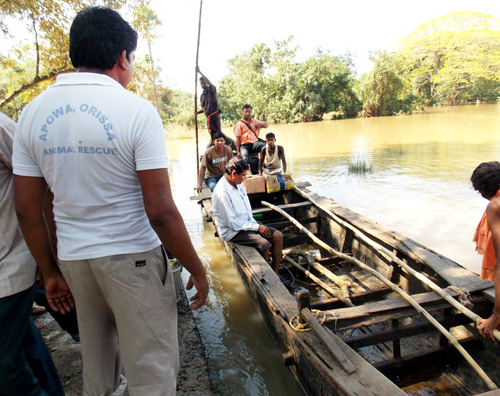 Floodwaters stand between villages. Our team traveled in a small boat to reach suffering animals.