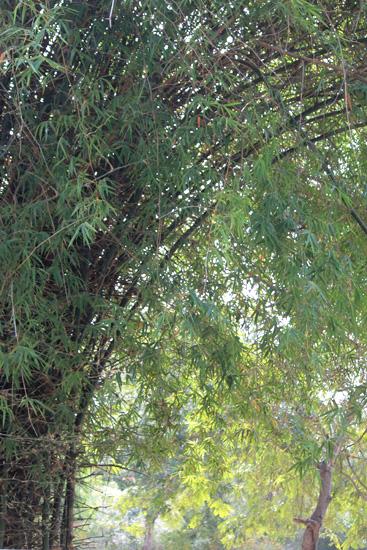 tree near sacred groveIMG_6582