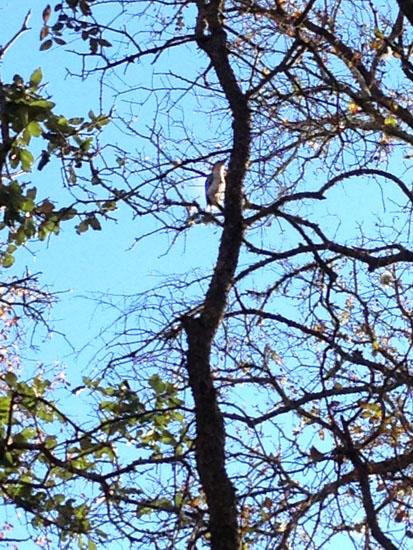 editedSag 1 bird in tree