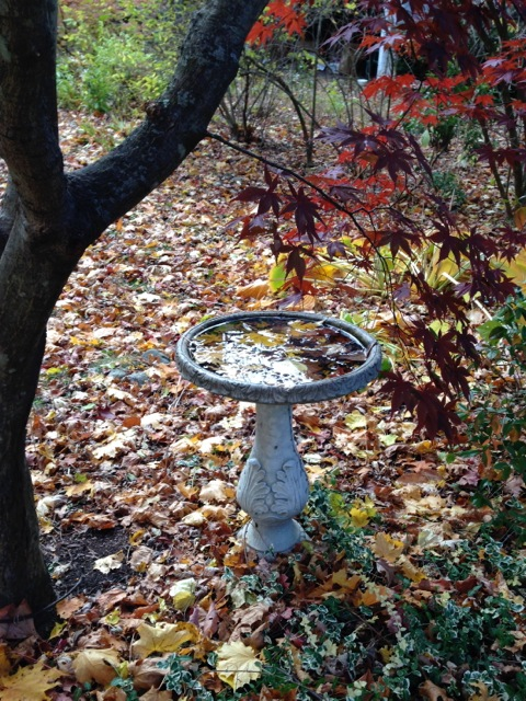 Birdbath in Autumn