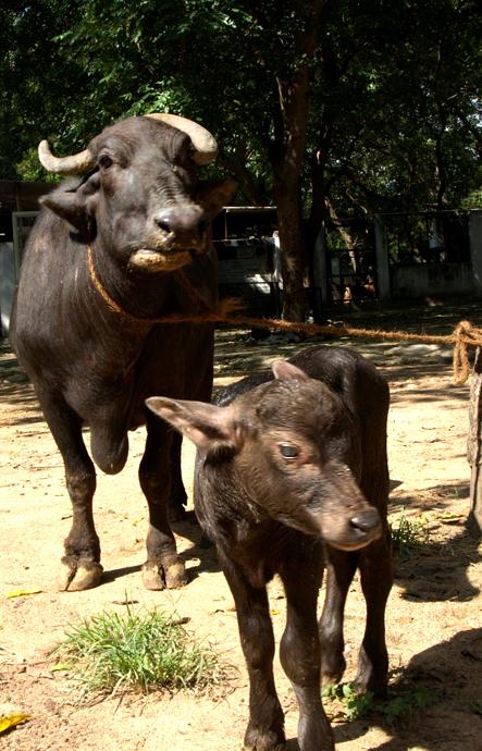 mam and baby00