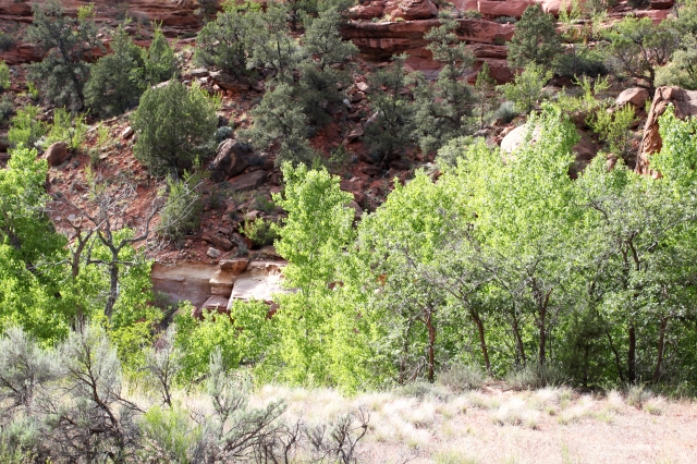 sh-photo-cottonwoods-at-zions