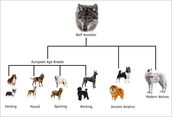 dog_history_tree
