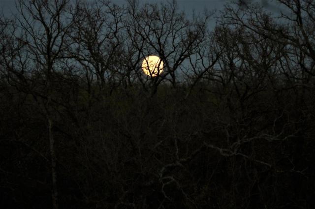 full-moon-over-trees-in-winter: publicdomainpictures.net